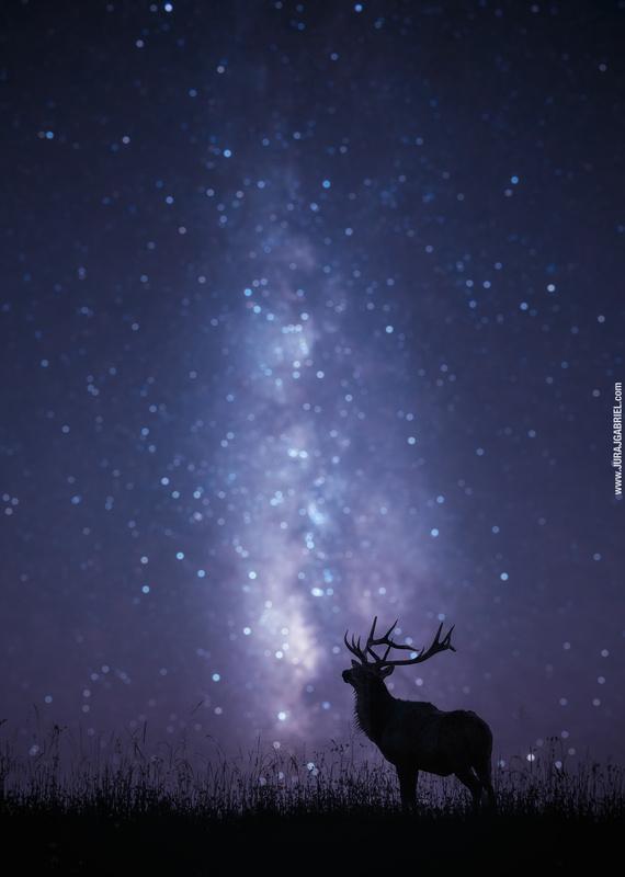 Deer by Juraj Gabriel