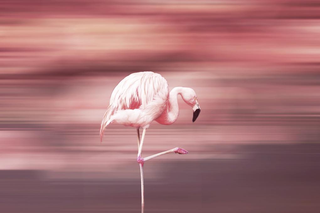 Pink is fashion by Andrea Santamaria