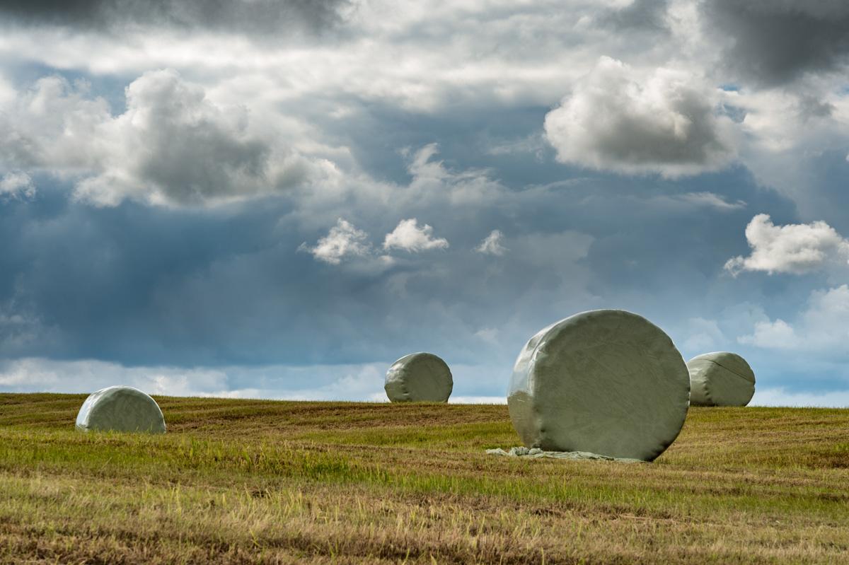 Icelandic Marshmallows by Tom Egel