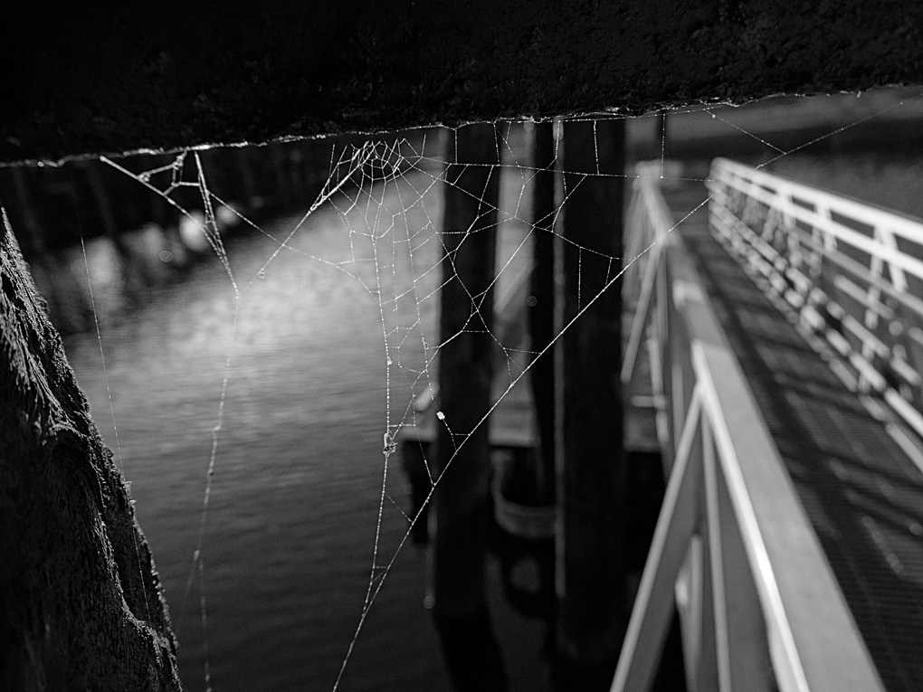 Spiderweb with a view by Shane Kristopher