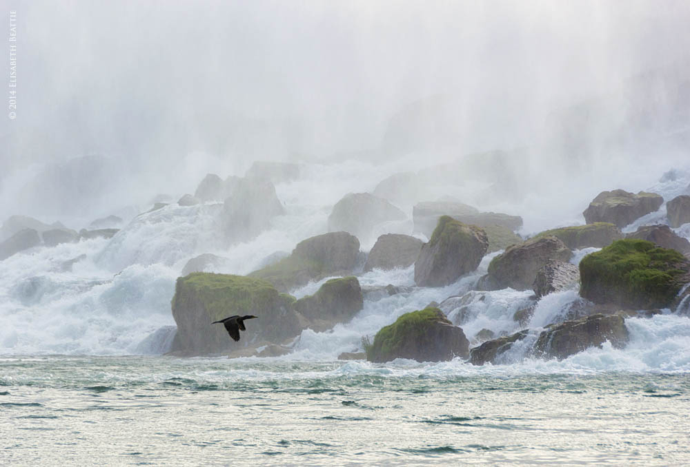 Cormorant at Niagara Falls by Lis Beattie