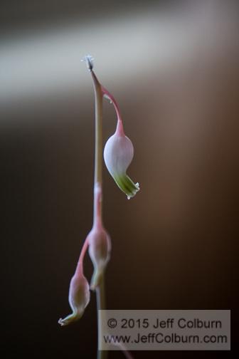 Flower by Jeff Colburn