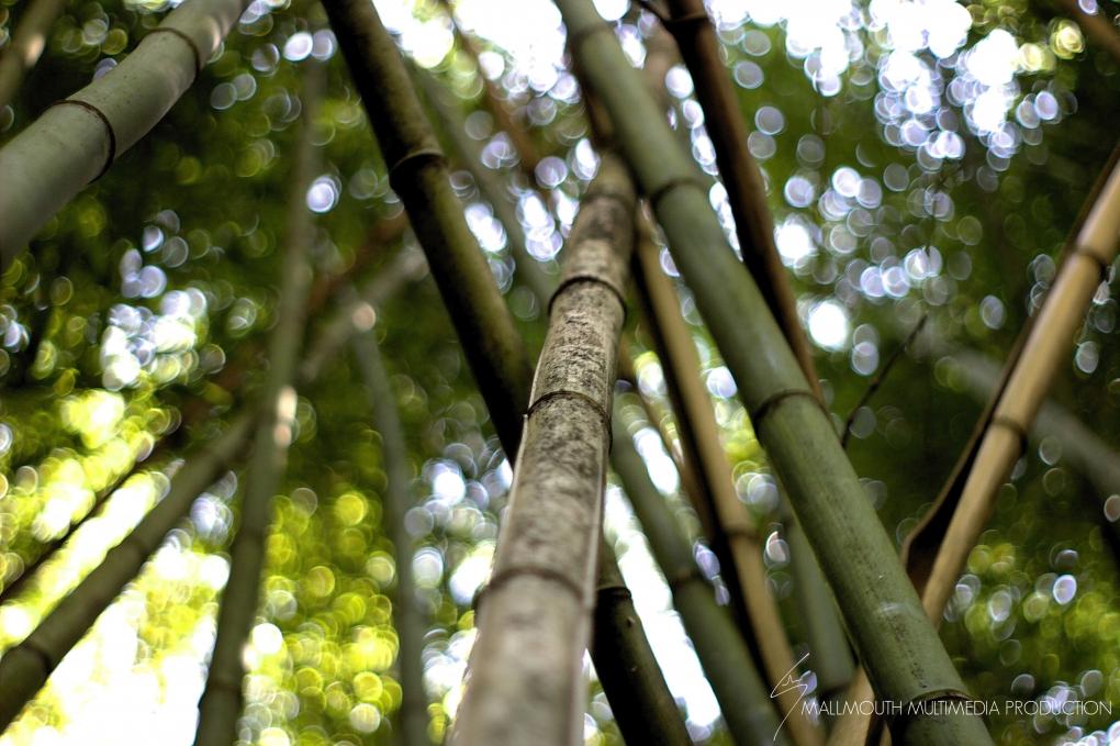 Bamboo by Hudson May