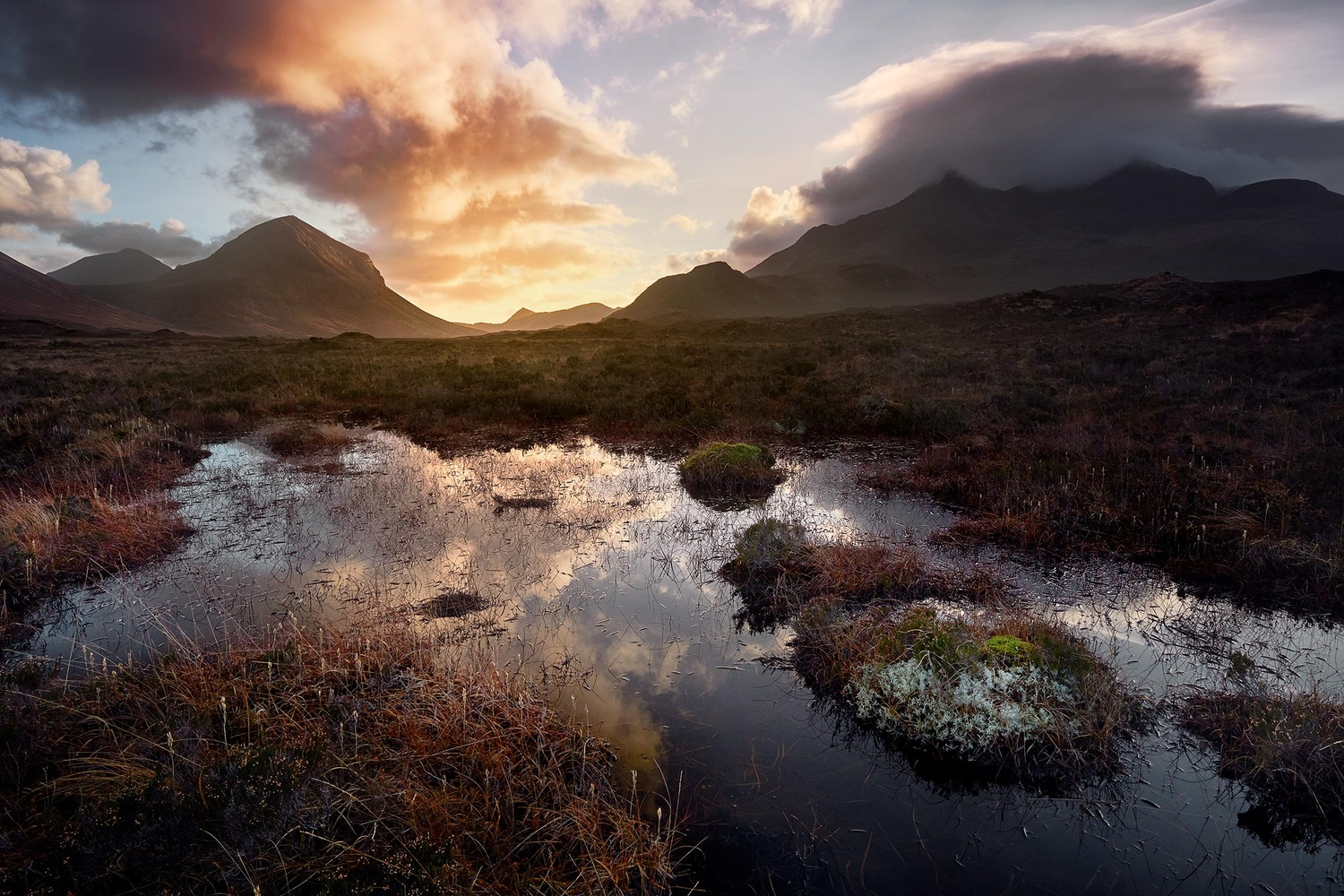 The bog by Anthony Robin