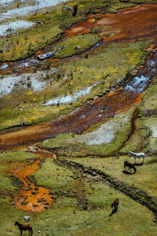 5 Horses in Cedros Valley by Eric Hodges