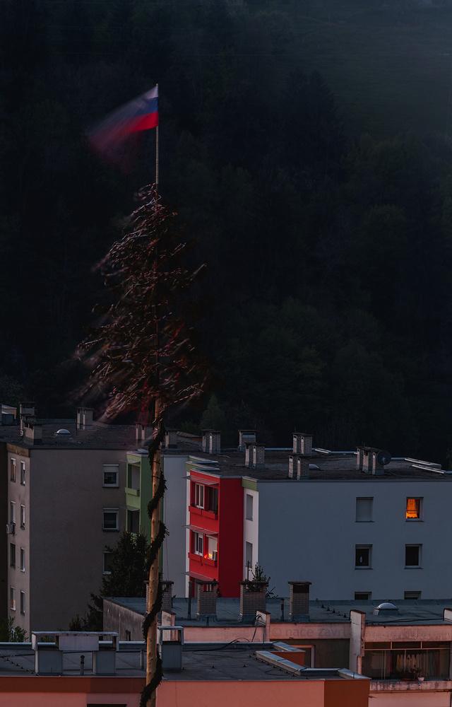 the laborday tree  by Nace Zavrl