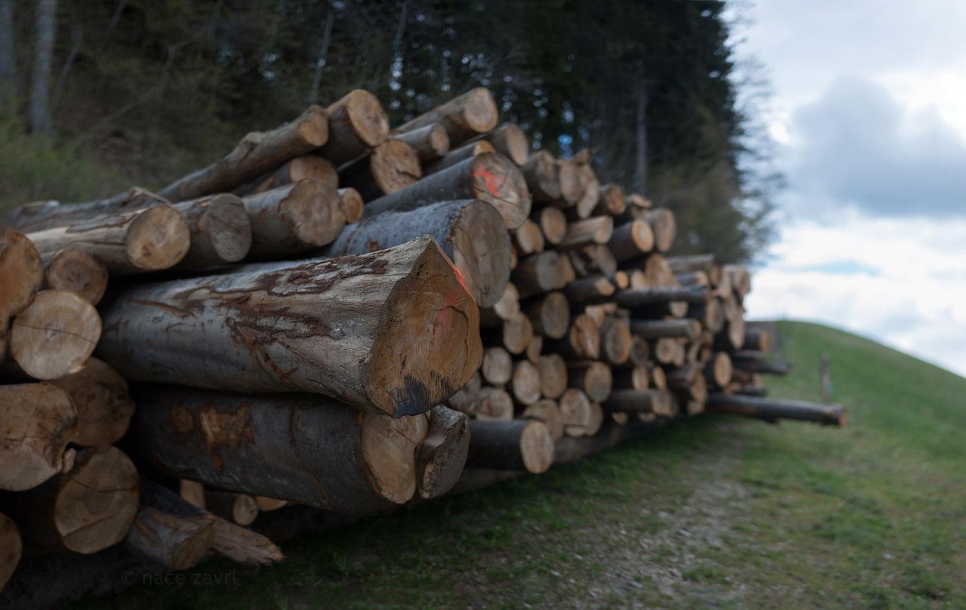 logs by the woods by Nace Zavrl