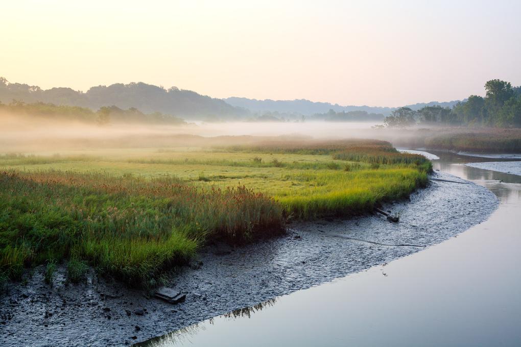 The Low Fog by Rob Mintzes