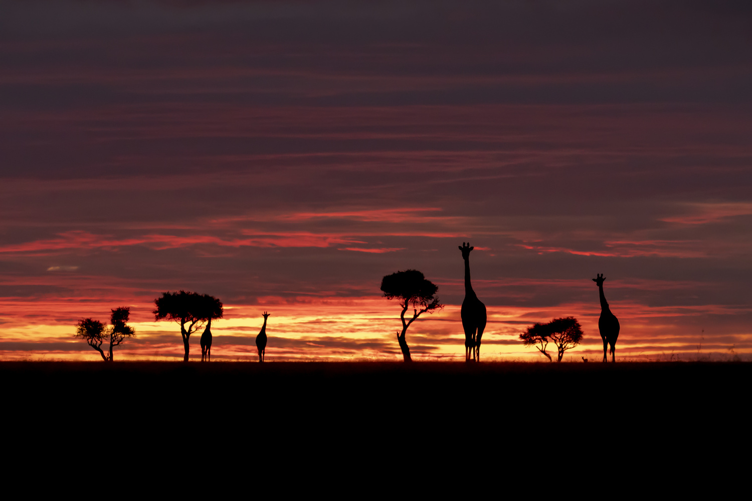 African Sunset by Steve Bryant