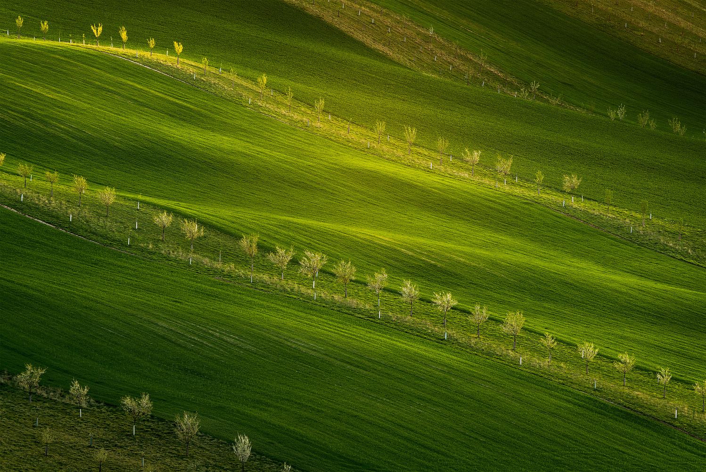 *** Lime Light *** by Shyama Prasad Mishra