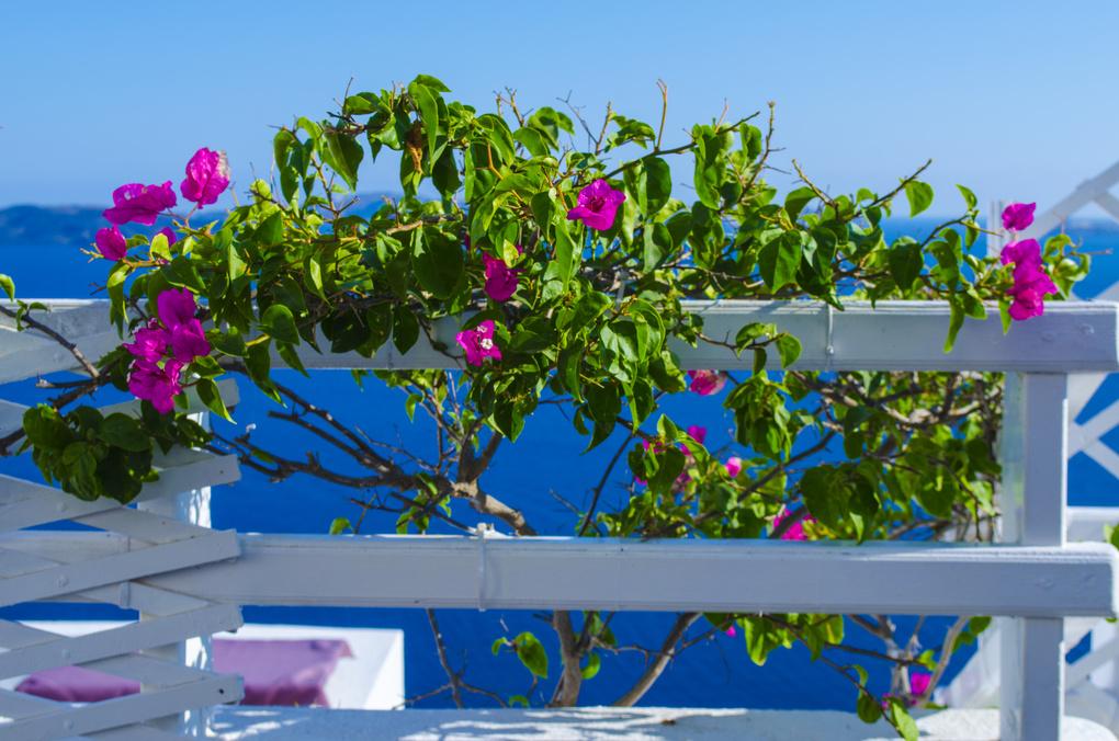 Flowers of Aegean Sea by Antonios Kritsotelis