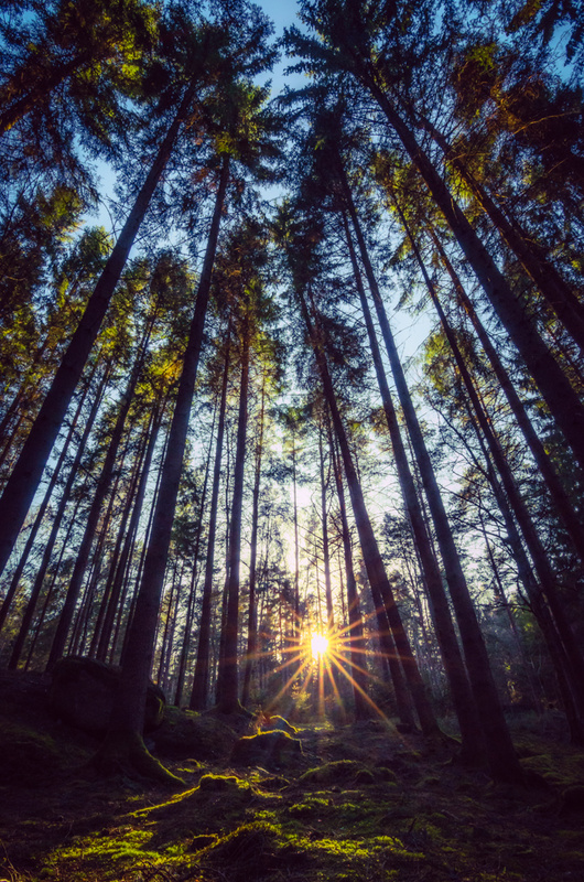 Deep Forest by Mats Forsberg
