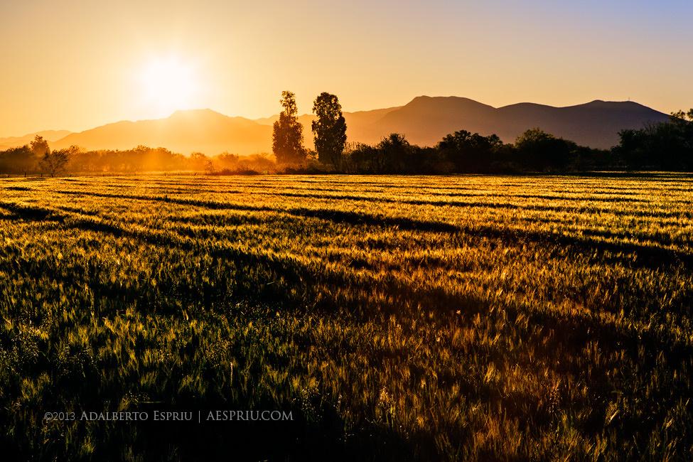 A Golden Sunrise over a field by Adalberto Espriú