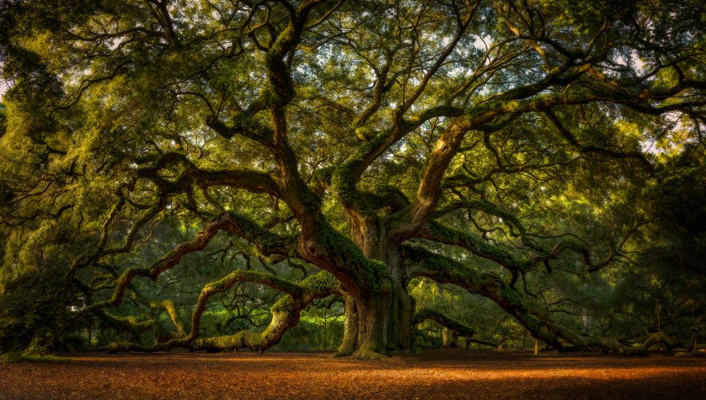 Angel Oak by Taylor Franta