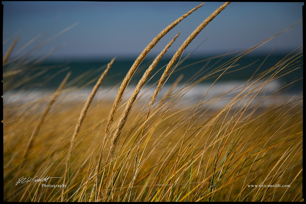 Dune grass and waves by Eric Smoldt