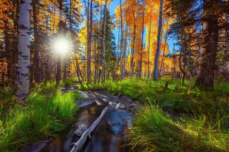 Duck Creek by Rex Jones