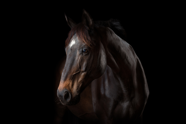 Hector The Horse by Dusan Holovej