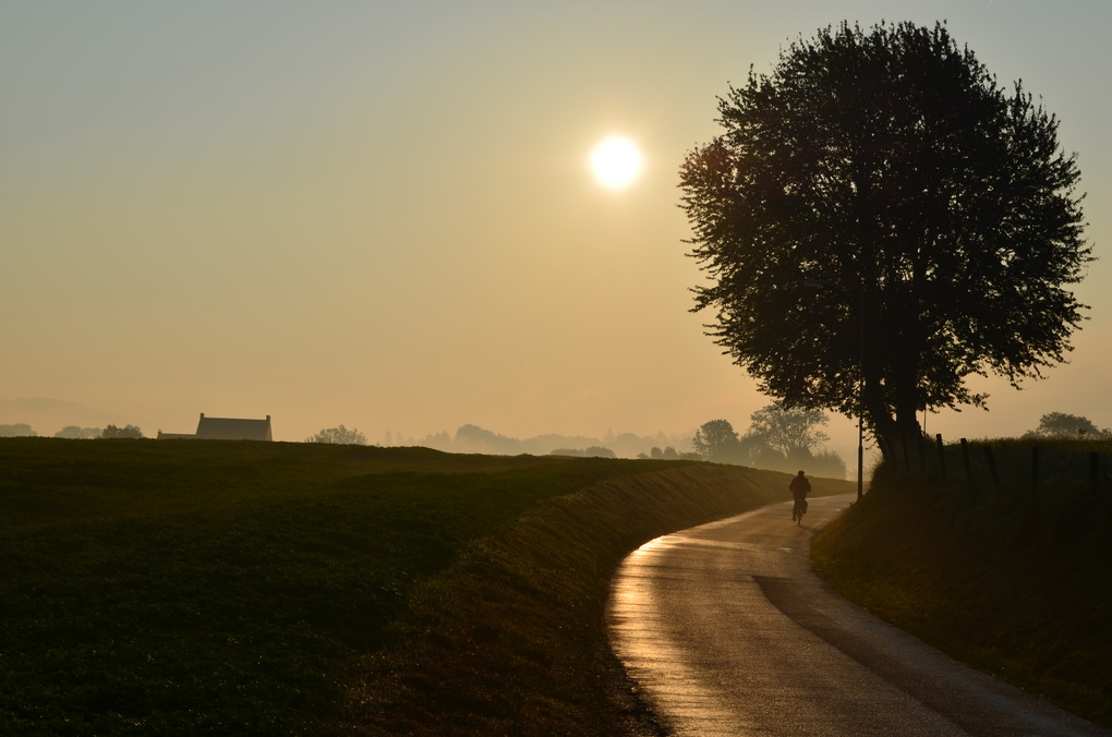 Morning Dew by Rainer Kersten