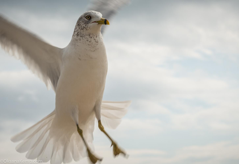 The Bird by Oksana Kemp
