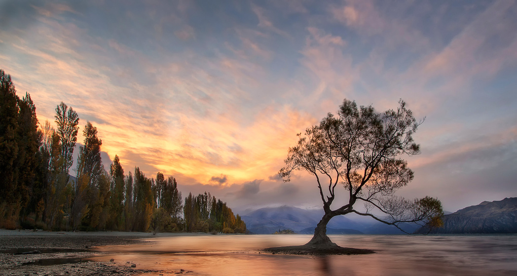 Lone Tree by Andrew Keane