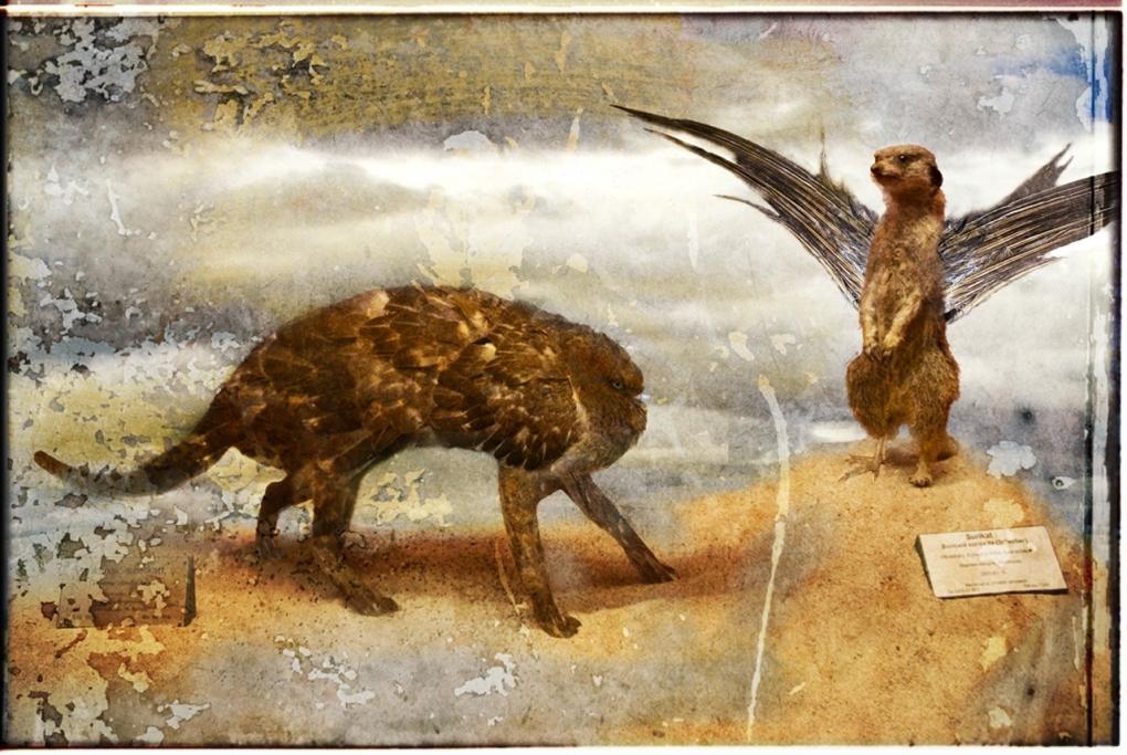 Evolution by Rickard Fallqvist