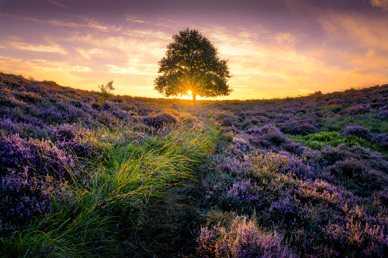 Posbank Sunrise by Martijn van der Nat