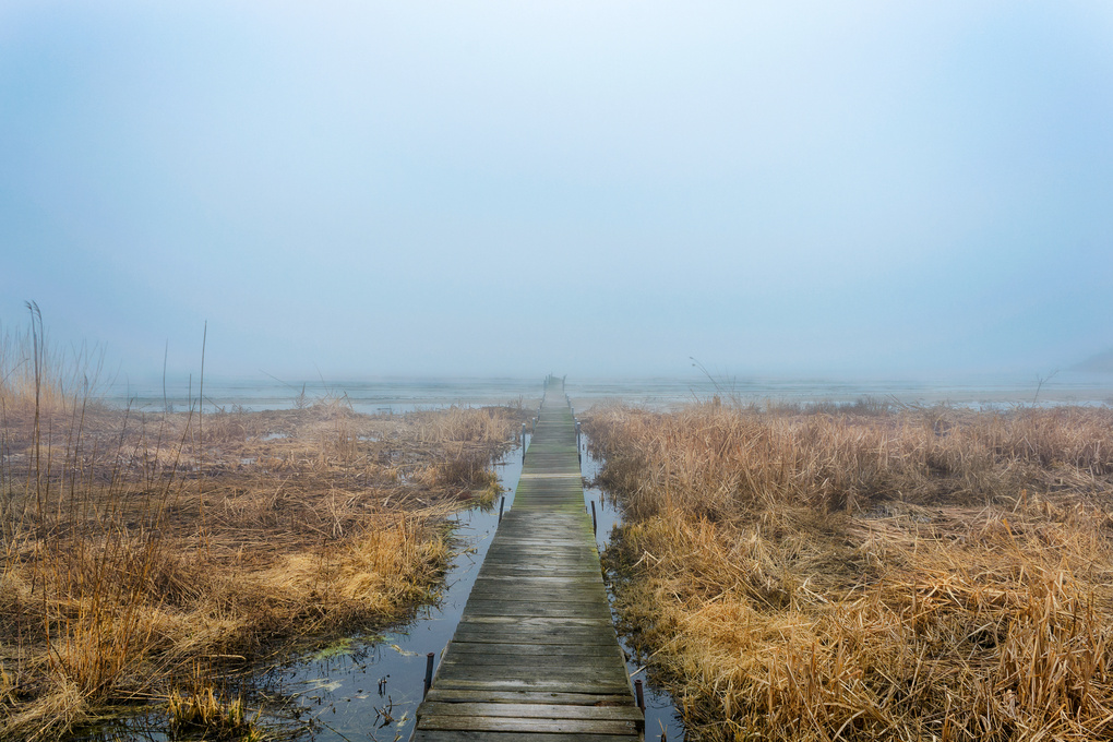 Into The Fog by Ben Baeb