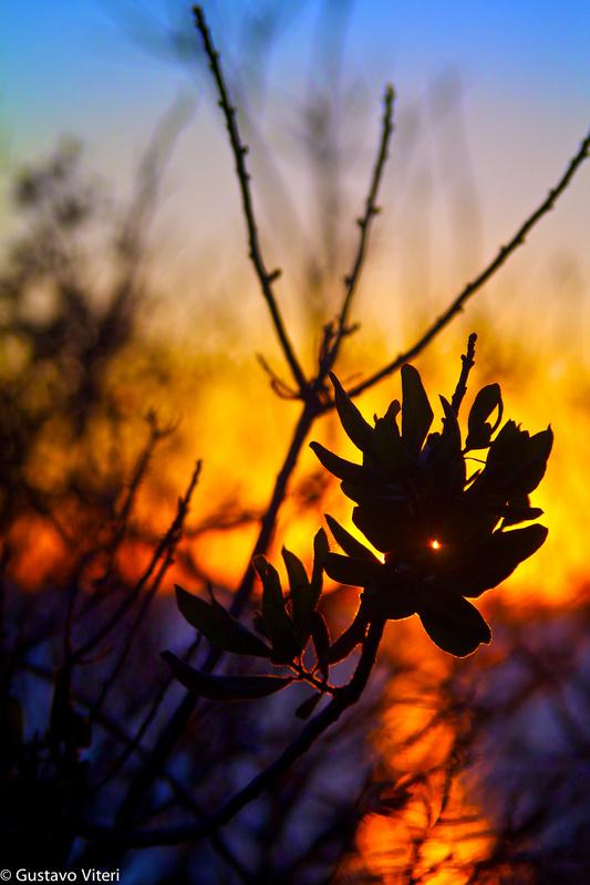 Hammonasset Sunset by Gustavo Viteri