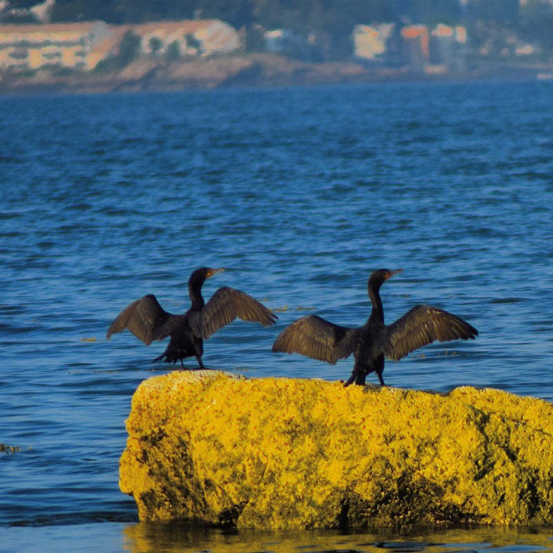 Them Birds by david kimball