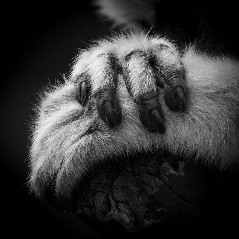 Hands by noel leahy