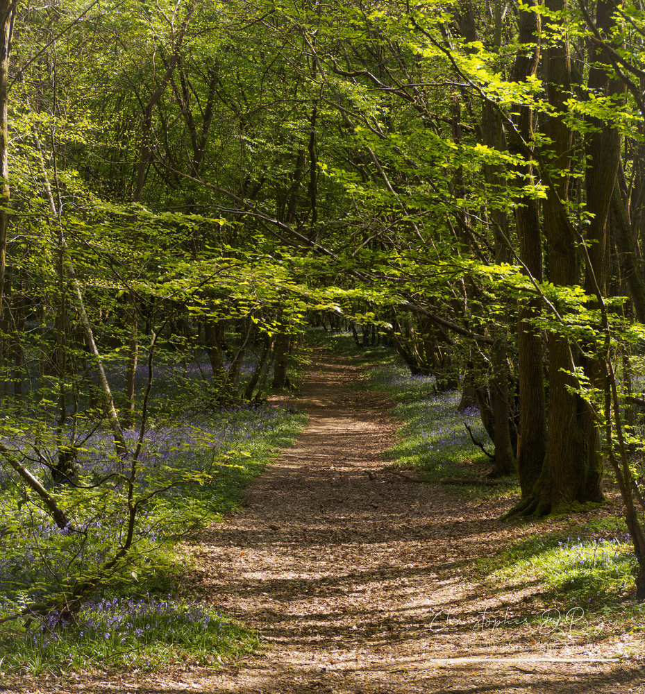 Bluebell walk by Chris page