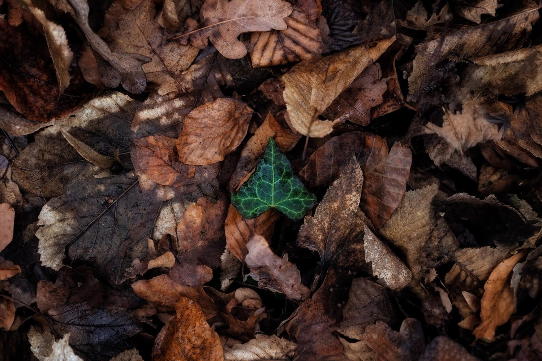 Survivalism by Igal Pronin