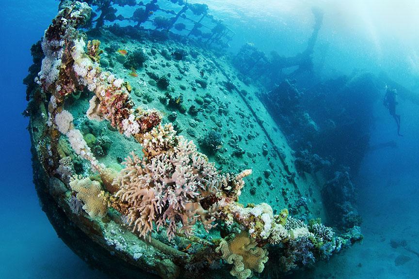 Hamada Wreck by Blake Temple