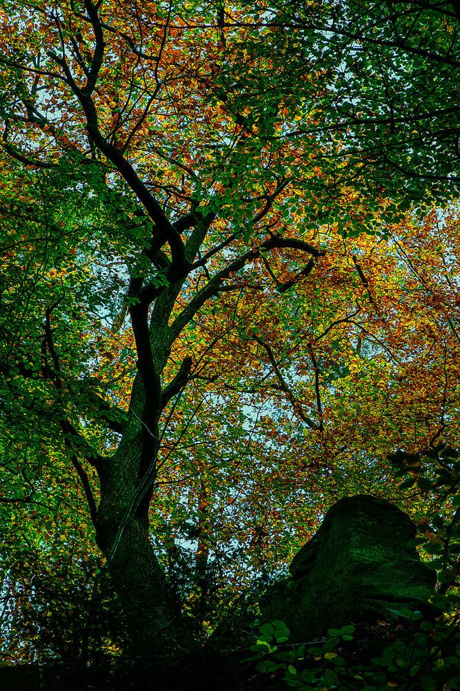 Klimt by Mik Pol