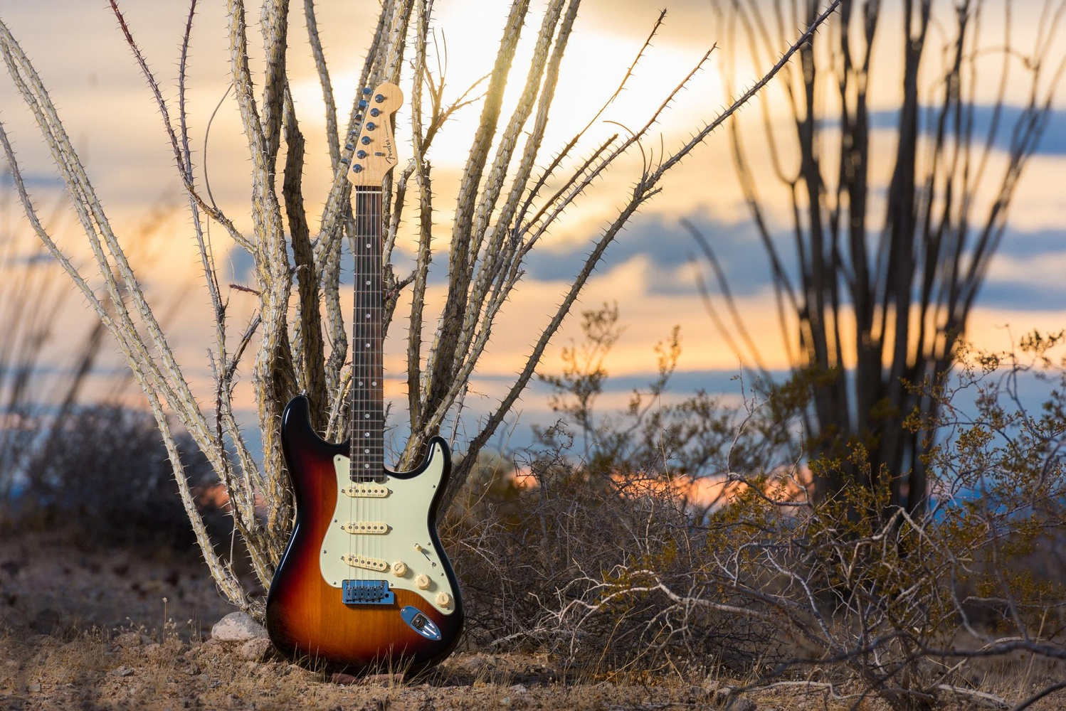 The Elite Series Fender American Statocaster  by Dusty Wooddell