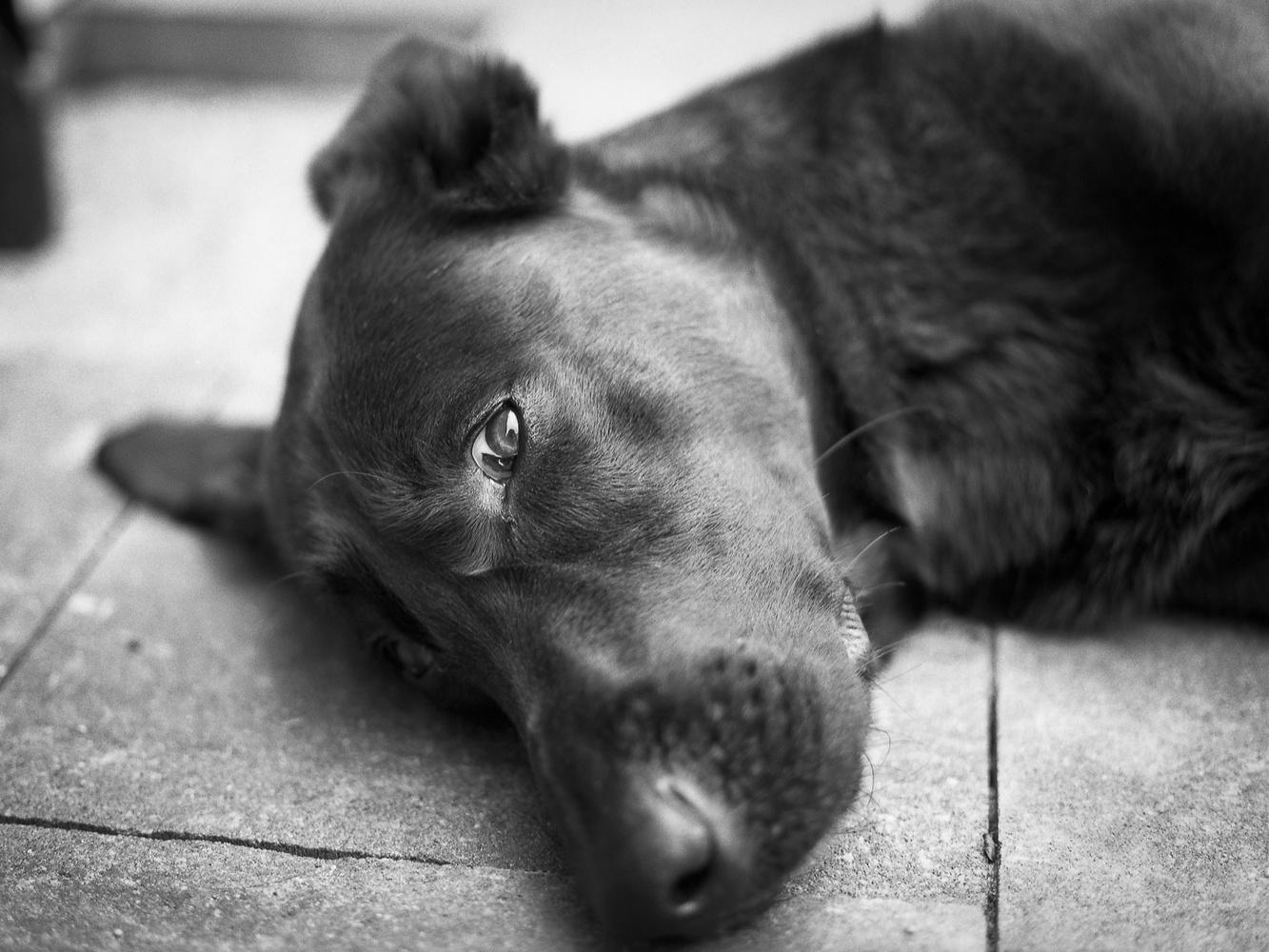 My dog Steve by Adam W