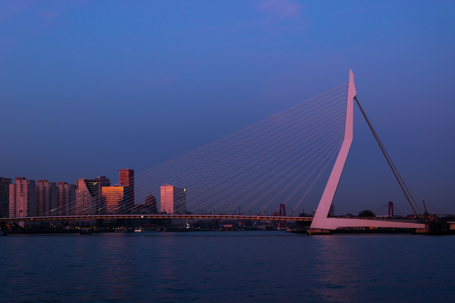 Erasmus Bridge Rotterdam by Adam W