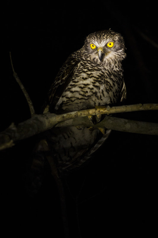 Powerful owl by Henry Baskerville