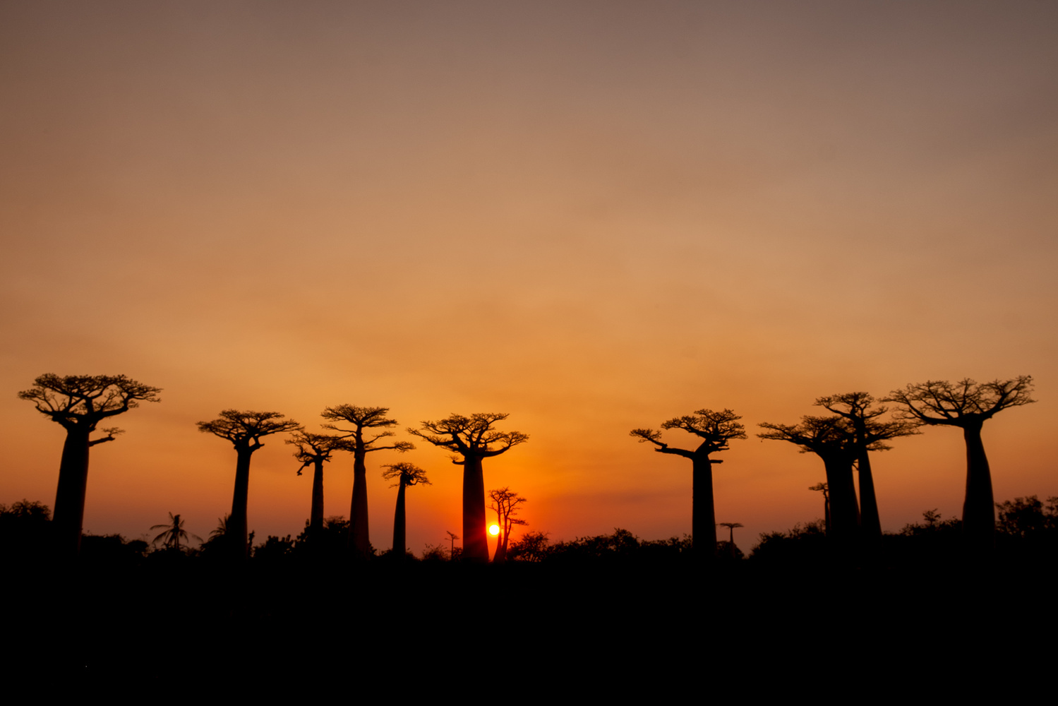 Baobab alley by Andrea Re Depaolini