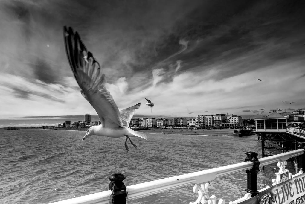 The Take off by Edward Younan