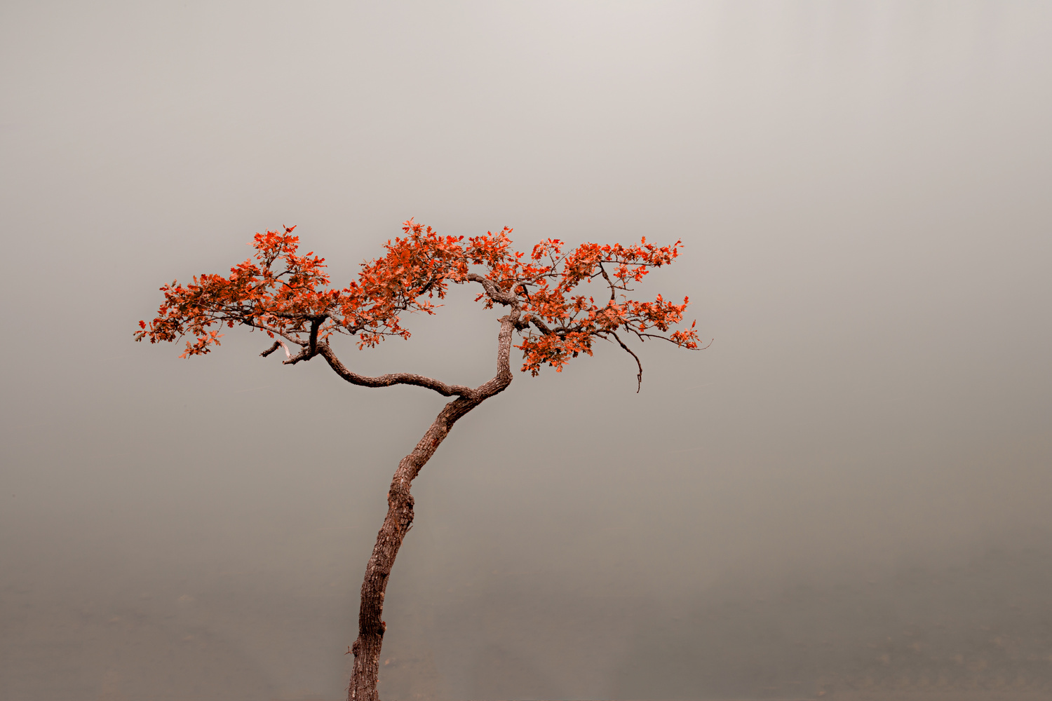 Lone Tree by Tim Pumphrey