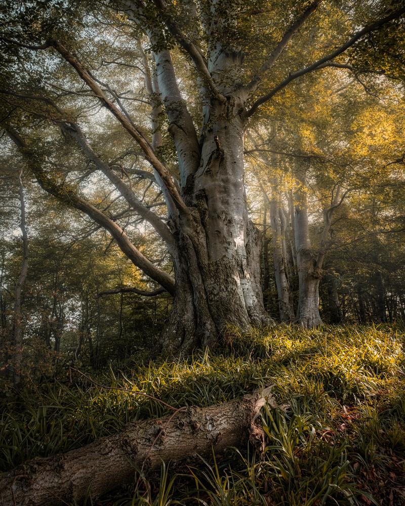 Morning sun by Gary McIntyre