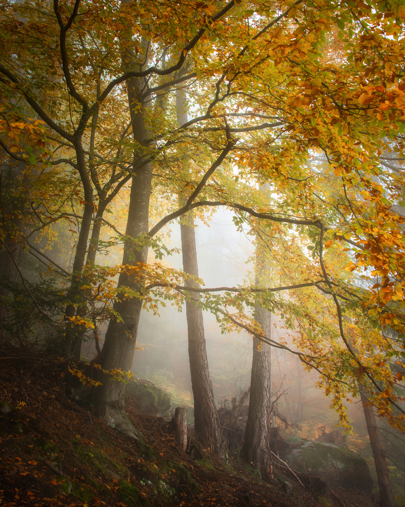 Foggy Forest by Philip Slotte