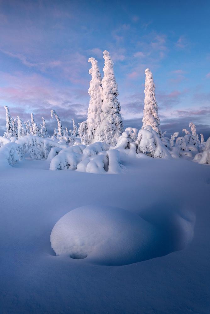 Wonderland by Philip Slotte