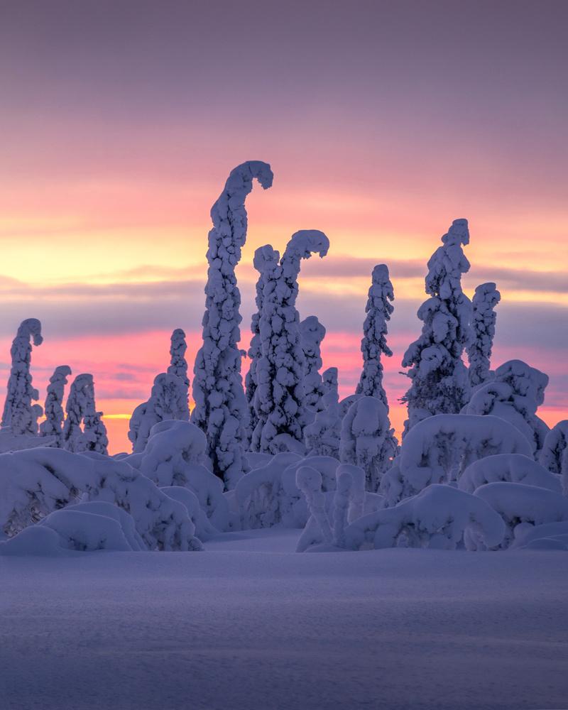 Winterland by Philip Slotte