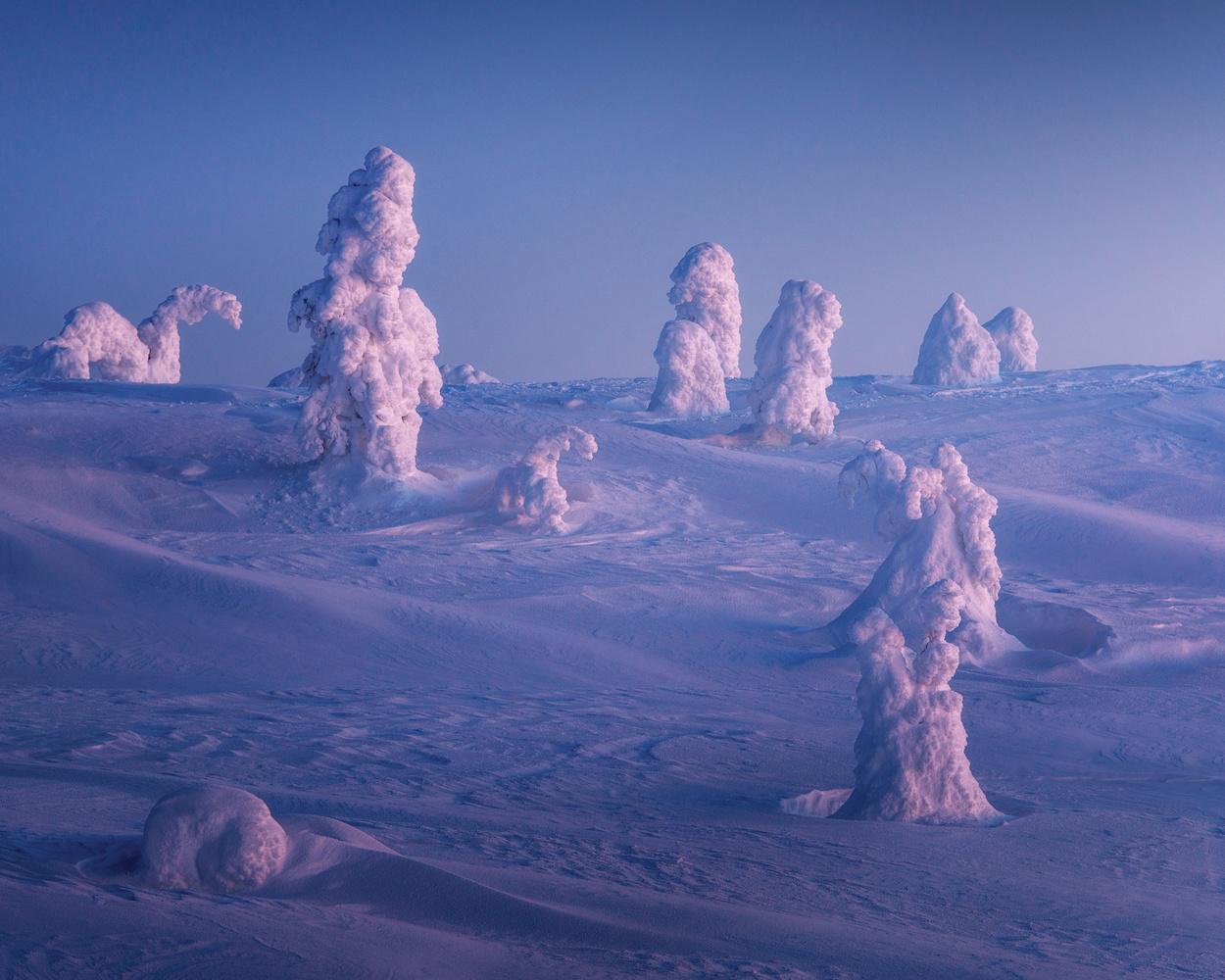 Frozen Trees by Philip Slotte
