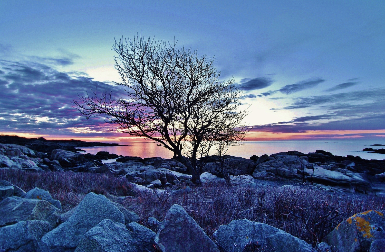 Blue naked tree by James Mlodynia