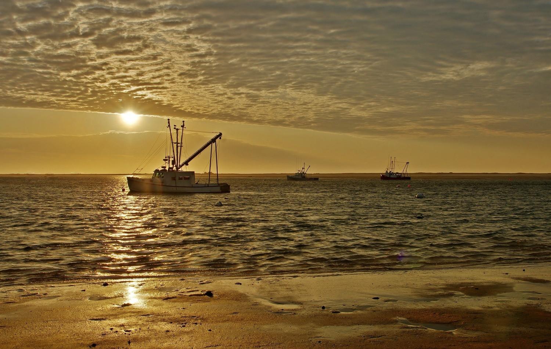Golden Trawlers by James Mlodynia
