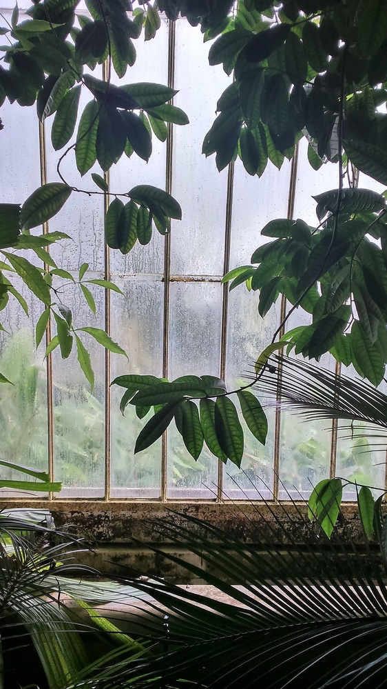 Atmospheric mood at the plants house by Paola De Giovanni