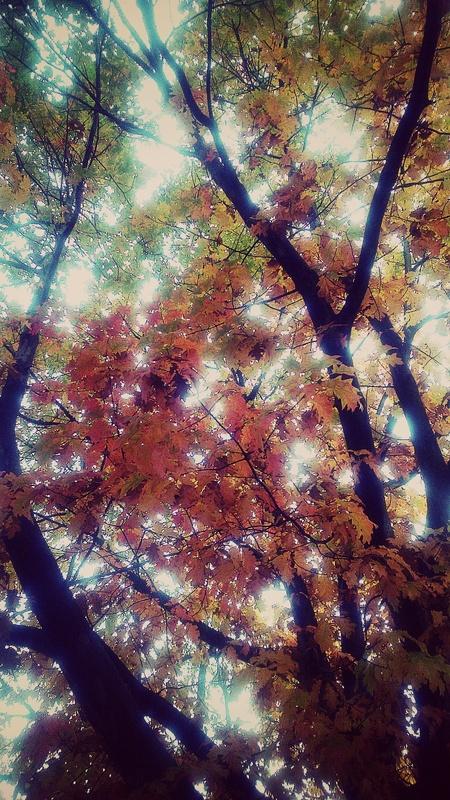 Autumn weave III by Paola De Giovanni